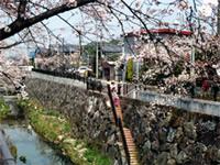 春の道(石川橋からかなえ橋)