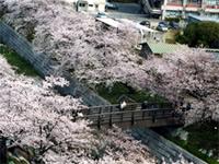 夏の道(かなえ橋から左右田橋)