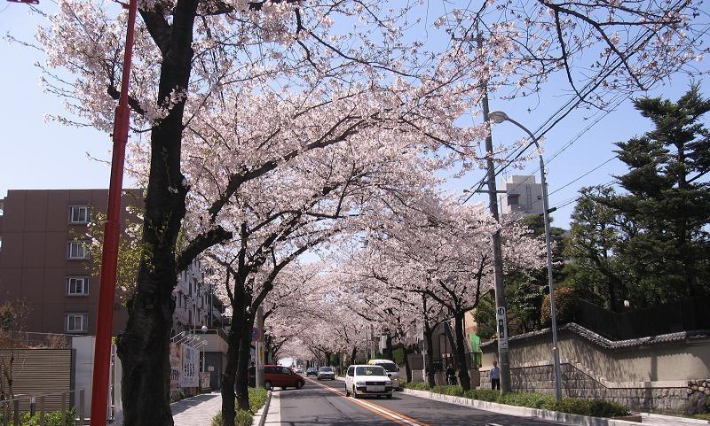 汐路桜ロード